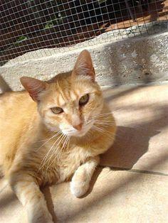 Helfende Hände e.V. - Katze Clärchen (EKH ca. 9-10 Jahre) sucht ein Zuhause…