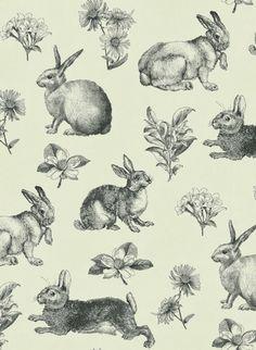 rabbit+visi.jpg (558×763)