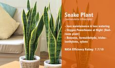 12 #Air #Cleaning #Houseplant By #NASA Will Make You #Healthy #stress #cancer