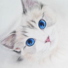 Cute Cat with Blue Eyes – Cat Supplies Tattoo Gato, Cat Tattoo, Animal Paintings, Animal Drawings, Tattoos For Dog Lovers, Cat With Blue Eyes, Cat Sketch, Image Manga, Cat Supplies