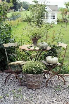 Gardening Autumn - Idea for area just off patio (gravel) where the grass wont grow. Would keep the house a little cleaner with less sand. - With the arrival of rains and falling temperatures autumn is a perfect opportunity to make new plantations Dream Garden, Garden Art, Garden Ideas, Garden Table, Cacti Garden, Porch Garden, Diy Garden, Tropical Garden, Garden Paths