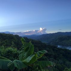 Jíbaro Manicato — That fresh morning mountain air to get you up and...