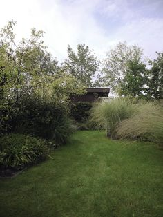 Tuinontwerp met natuurlijke beplanting van vaste planten en grassen. Garden design with perennials and grasses. Ontwerp en realisatie De Peppels Tuinen