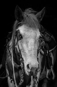 Nala      American Paint Horse Filly      Born 09 April 2012