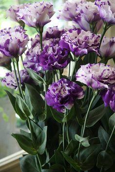 flower-Eustoma #lisianthus #flower