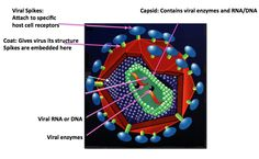 Viruses: natures perfect reproductive machine