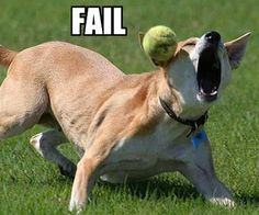 fetch fail 25 Funny Dog Pictures With Captions