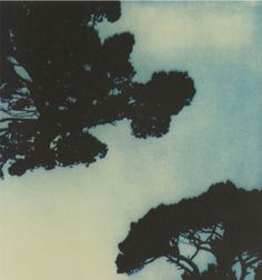 Cy Twombly-Trees, Capri  source Decade Diary