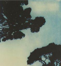Cy Twombly-Trees, Capri source Decade Diary
