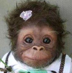 cute #monkey