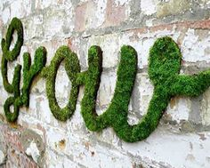 moss growing on a wall in the shape of the word grow