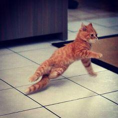 Cat  break dancing. Enough said.