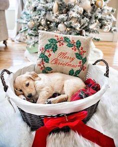 Christmas puppy love kerst kerstmis pup