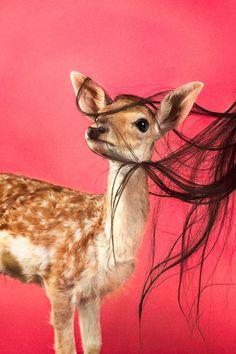 art direction | deer + hair for T Magazine