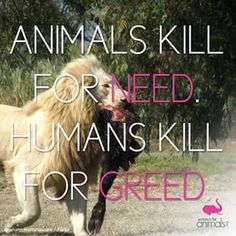 #cute #love #beautiful #nature #animal #animals #wildlife #pets #lion #dog #kitten #cat #animaltesting #animalliberation #animalwelfare #animalrights #vegan #furfree #goveg #crueltyfree #veganlife #meatismurder #animallovers #vegansofig #animalrescue #sav