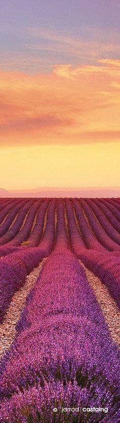 Sunset over lavender fields, Valensole, Provence, France
