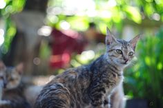 Cat by Syefri Luwis - Photo 134676719 - 500px