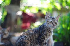 Cat by Syefri Luwis - Photo 134676719 - 500px
