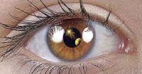 موقع المصطفى فرحات: العيون الراعية