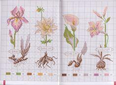 Gallery.ru / Фото #7 - mango flores - geminiana