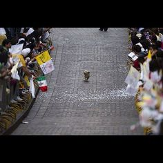 The people of Mexico were lined up along the streets to see the Pope. This little guy thought otherwise.---- The way Anouk perceives parades? I think so! Funny Animals, Cute Animals, Guys Thoughts, Happy Photos, Happy Pictures, Amazing Pictures, Der Arm, Dog Runs, Faith In Humanity