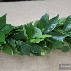 Salal with Cocculus