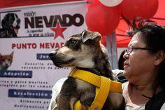 Solicitarán a la ANC penalizar el maltrato a los animales