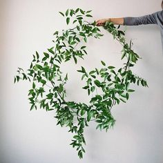 Sweet inspiration for a very simple green wreath. This looks like nandina, but don't quote me on that. I think the same look could be achieved using a. Floral Wedding, Diy Wedding, Wedding Flowers, Trendy Wedding, Blog Da Carlota, Italian Ruscus, Greenery Wreath, Vine Wreath, Floral Wreaths