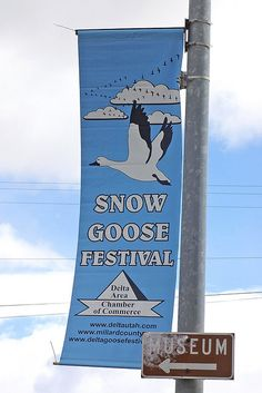 Snow Goose Festival annual event in Delta, Millard County, Utah.  Add this to my bucket list!