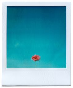 POLAROID PERFECTION!  Springtime Again by Grant Hamilton, via Flickr