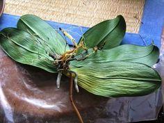 Fonnyadnak a levelei? Adj neki még egy új esélyt! Cactus, Bonsai, Plant Leaves, Garden, Succulents, Plant, Tights, Flowers, Prickly Pear Cactus