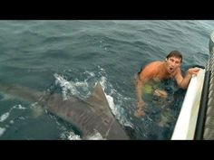 Guy's Close Encounter With A #Shark