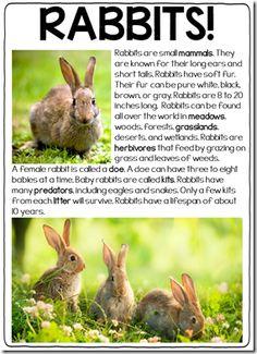 Rabbits Nonfiction | Nonfiction, Texts and Kind of