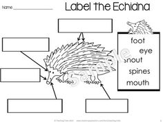 Australia for Kinder Kids has 50 fun Language and Math 'Australia themed' printables, including: labeling Australian animals; Read, Roll and Write sight words; O'clock time; Counting by 5 and 10 and using Tally Marks. Australia For Kids, Australia Crafts, Australia Animals, Word Work Activities, Animal Activities, Kindergarten Activities, Cvc Words, Sight Words, Around The World Theme