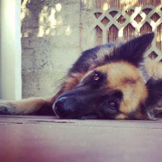 my dog ...my friend ...my heart❤