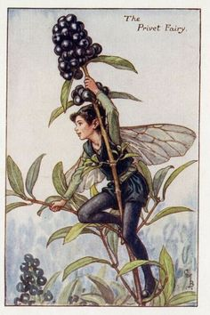 Privet Fairy by Cicely Mary Barker