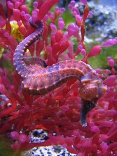 beautiful seahorses in love | Aquarium Fish July 2008 Photo Contest Winner | Flickr - Photo Sharing!