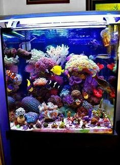 Saltwater Aquarium Decorations For Your Marine Tank Now for the enjoyable part-- saltwater fish tank designs are one element of marine fish keeping where you Saltwater Aquarium Beginner, Saltwater Aquarium Fish, Saltwater Tank, Planted Aquarium, Coral Reef Aquarium, Tropical Aquarium, Marine Aquarium, Marine Fish Tanks, Marine Tank