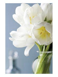 White Tulips Bouquet by Christine Zalewski