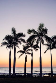 Palm trees overlooking the ocean in Costa Rica at sunset. Photographed by Kristen M. Brown, Samba to the Sea for The Sunset Shop.