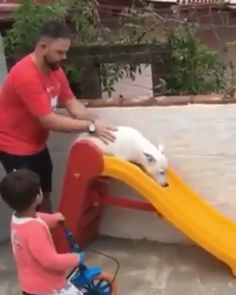 funny dogs memes - Funny Dog Quotes - He barely goes anywhere but he loved the slide. The post funny dogs memes appeared first on Gag Dad. Cute Funny Animals, Cute Baby Animals, Animals And Pets, Cute Animal Videos, Funny Animal Pictures, Funny Dog Memes, Funny Dogs, Cute Puppies, Cute Dogs