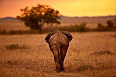 My Africa 7 by ayed al-ajme, via 500px
