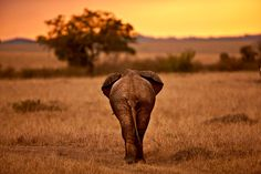 My Africa 7 by ayed al-ajme on 500px