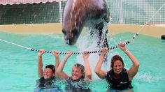 The girls are going to get up close and personal with lovable South American sea lions in this unique deep-water swim interaction. Ryan and Bob and Uncle Brian are all going deep sea fishing the day we're on St. Thomas!