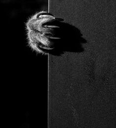 ★ from ANOTHER PLANET #Photography. #shadows #cats