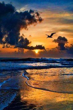 ~~    Tunisian sea      ~~          Africa