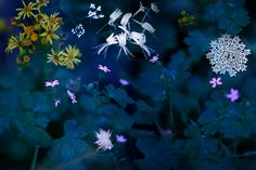Flowers in the Dark by Luis Mariano González on 500px