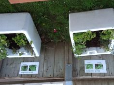 Herb garden made with donated and bought plants, tended by a horticultural colleague and the children.