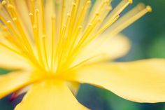 yellow 'splosion