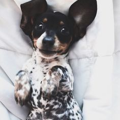 cute, dog, and puppy afbeelding